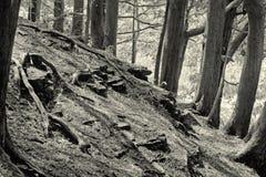 Nature (69, black and white) Stock Photo