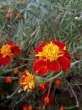 Nature. Vibrant colours glorify your garden Royalty Free Stock Photos