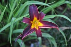 Nature& x27; vida vegetal bonita de s Imagem de Stock Royalty Free