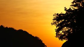 Nature video close up of silhouette Trees by wind with sunset in nature concept.  stock footage