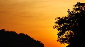Nature video close up of silhouette Trees by wind with sunset in nature concept.  stock video
