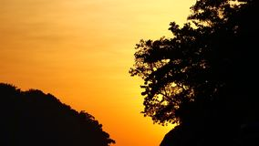 Nature video close up of silhouette Trees by wind with sunset in nature concept.  stock video footage