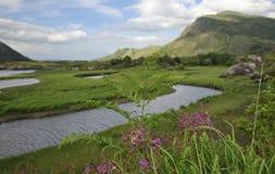 Nature vierge irlandaise Image stock
