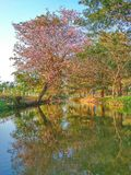Nature view flower reflection tree. Basin reflection view stock photo