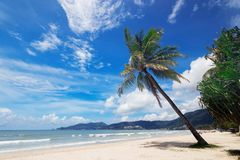 Nature view of nice tropical summer beach with palms around royalty free stock photo