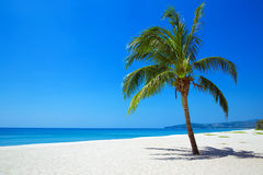 Nature View of tropical beach with one lonely palm. Stock Photos