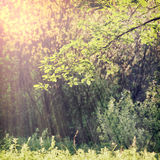 Nature-1. Vintage nature background in summer style Stock Photography