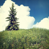 Nature-15. Vintage nature background in summer style Royalty Free Stock Photo