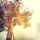 Nature-2. Vintage nature background in summer style Royalty Free Stock Photos