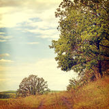 Nature-26. Vintage nature background in summer style Stock Photography
