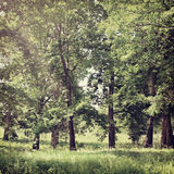 Nature-8. Vintage nature background in summer style Stock Photos