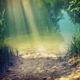 Nature. Vintage nature background in summer style Royalty Free Stock Photo