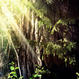 Nature. Vintage nature background in summer style Stock Image