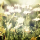 Nature. Vintage flower in summer background Stock Photography