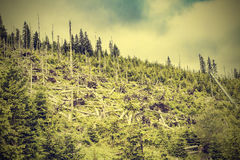 Nature vintage mountain background. Stock Images
