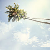 Nature. Vintage palm in tropic background Royalty Free Stock Photos