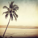 Nature. Vintage palm in tropic background Stock Photography