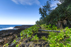 Nature and volcanic rocks in the south coast of Reunion Island Royalty Free Stock Photos