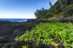 Nature and volcanic rocks in the south coast of Reunion Island Royalty Free Stock Images