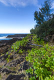 Nature and volcanic rocks in the south coast of Reunion Island Royalty Free Stock Photo