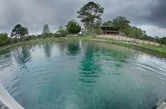 Nature at vortex springs florida on rainy day. Nature at vortex springs florida on rainy  day Royalty Free Stock Photo