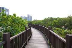 Nature walk. A bridge wooden deck platform in Taiwan, north of Taipei. wetlands running under the bridge in a nature preserve covered by a canopy of trees next royalty free stock photos