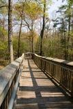 Nature Walk. Raised wood plank nature walk through a Louisiana swamp Royalty Free Stock Image