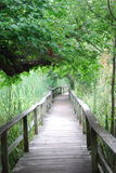 Nature walk. Wooden walkway through nature preserve Stock Photography
