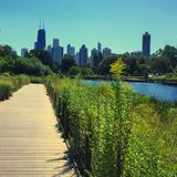 Nature walk in Chicago's Lincoln Park. View of Chicago skyline from the nature walk in Lincoln Park in Chicago Stock Image