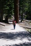 Nature Walk or Hiker stock photo