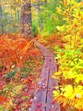 Nature walk. This small path leads you through balst of color Stock Images
