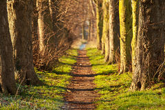 Nature walk tunnel. In Stafford United Kingdom Royalty Free Stock Images
