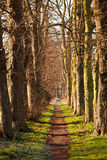 Nature walk tunnel. In Stafford United Kingdom Stock Image