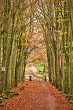 Nature walk tunnel. At Stafford Castle in the UK Royalty Free Stock Images