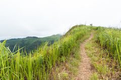 Nature walkway. Walkway on the hill with mountain view Stock Photography