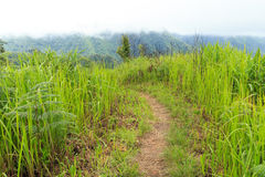 Nature walkway. Walkway on the hill with mountain view Stock Images