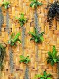 Nature wall Stock Photo