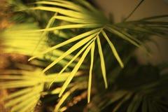 Bokeh style nature wallpaper. Green color splash background. Grass closeup. royalty free stock photos