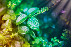 Nature: water drops on leaves. Raindrops on leaves, colorful nature scene. Spring and Autumn Royalty Free Stock Photography