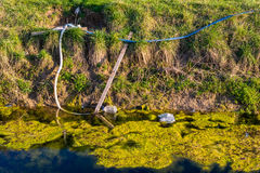 Nature and water pollution. Algae and seaweed in the water Stock Photos