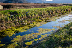 Nature and water pollution. Algae and seaweed in the water Stock Photography
