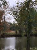 Autumn on the Bayou stock images