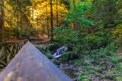 Nature, Water, Vegetation, Nature Reserve