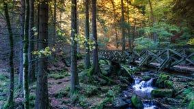 Nature, Water, Woodland, Vegetation