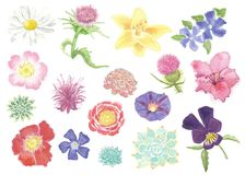 Watercolor Wildflower and Succulent Set Isolated royalty free illustration