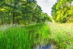 Nature at Waterloopbos Flevoland, Netherlands Stock Photo