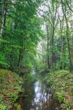 Nature at Waterloopbos Flevoland, Netherlands Royalty Free Stock Photos