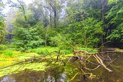 Nature at Waterloopbos Flevoland, Netherlands Royalty Free Stock Images
