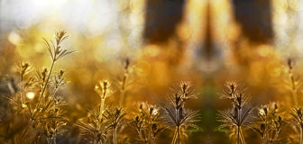 Nature website banner Royalty Free Stock Images