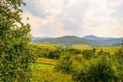 Nature of Western Ukraine. Silence and garmony. Nature of Western Ukraine in the august is colorfool stock photos